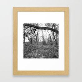 Woods B&W Framed Art Print