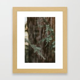 The Pine  Framed Art Print