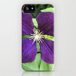 Large Royal Purple Flower iPhone Case