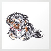shih tzu Art Prints featuring Shih Tzu by bellandpixel