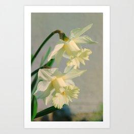 Colorized Daffodils Nature / Floral / Botanical Photograph Art Print