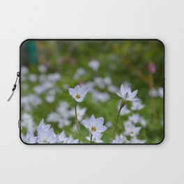 Spring Starflower  - Tristagma uniflorum Laptop Sleeve