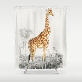 Giraffe (Giraffa Camelopardalis) Illustration Shower Curtain