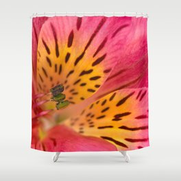 Peruvian Lily Macro Shower Curtain