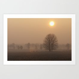Early morning in a clearing Art Print