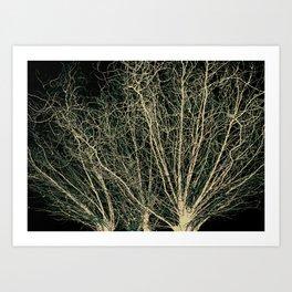 On a Willow's Wim Art Print
