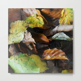 Autumn IV Metal Print