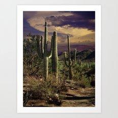 Saguaro Cactuses in Saguaro National Park Art Print