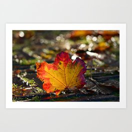 Autumn Maple Leaf with Bokeh Background Art Print