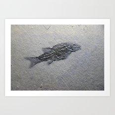 Semionotus Art Print