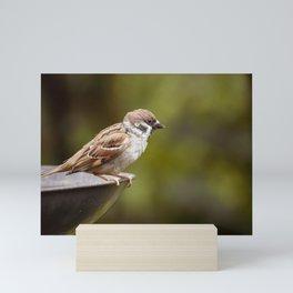 Sparrow Wild Bird Mini Art Print