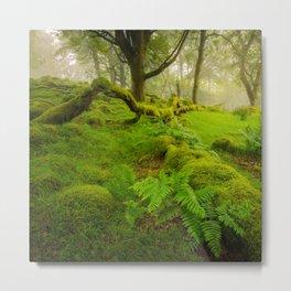Magic garden 2  - Wicklow Mountains  (RR90) Metal Print