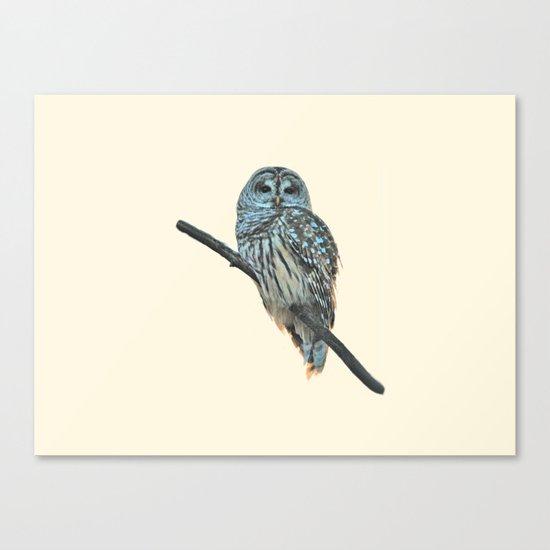 Barred Owl (beige) Canvas Print