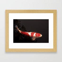 Orange and White Koi Framed Art Print