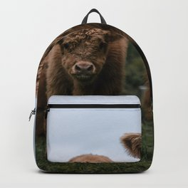 Scottish Highland Cattle Calves - Babies playing II Backpack
