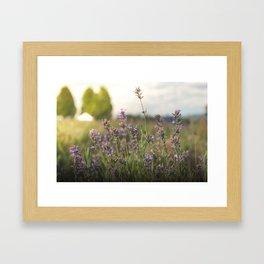 flower photography by Jon Phillips Framed Art Print