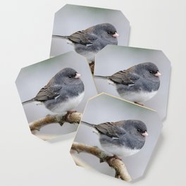 Fluffy Cassiar Dark-Eyed Junco on the Pear Tree Coaster