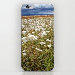 Cotton Grass, North York Moors National Park iPhone Skin
