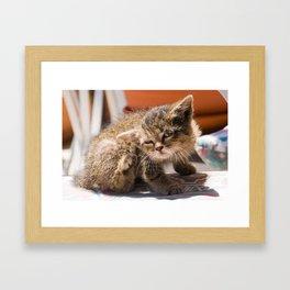 Yoda Cat Framed Art Print