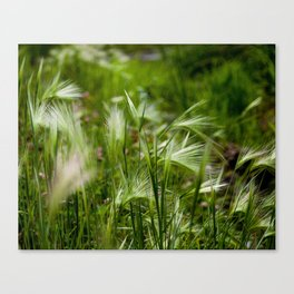 Whispy Canvas Print