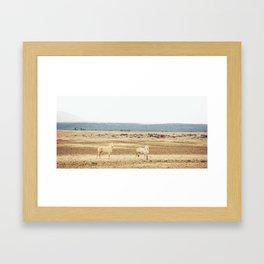 Two Oregon Horses Framed Art Print