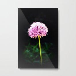 Chive Flower Metal Print