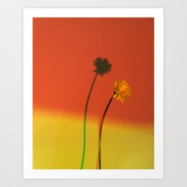 Flower and Shadow Art Print