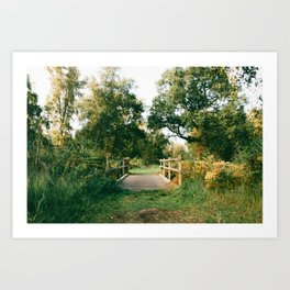 Holme Woods 2 Art Print