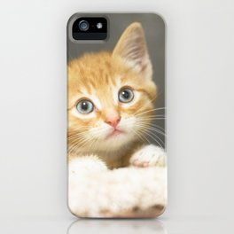 Ginger kitten playing in a box iPhone Case