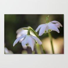 Little woodland stars Canvas Print