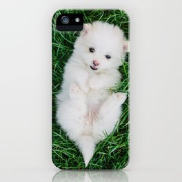 Fluffy White Cute Puppy iPhone Case