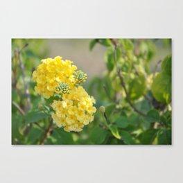 Yellow Mellow Flowers Fine Art Photography Canvas Print