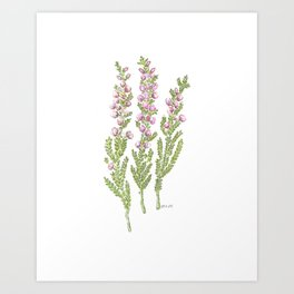 Pink Heather Watercolor Art Print
