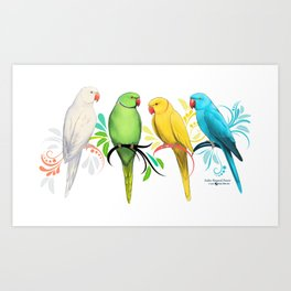 Indian Ringneck Parrots Art Print