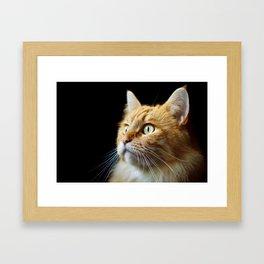 Portrait of ginger cat close-up. Framed Art Print