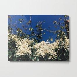 Clematis Bloom Metal Print