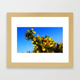 Gauze Bush Framed Art Print