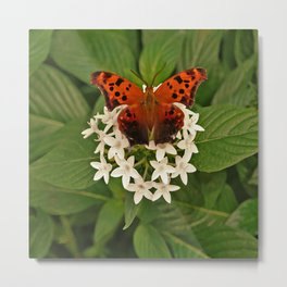 BUTTERFLY CIRCLED BY WHITE FLOWERS Metal Print