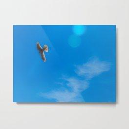 Peregrine Falcon Midflight Metal Print