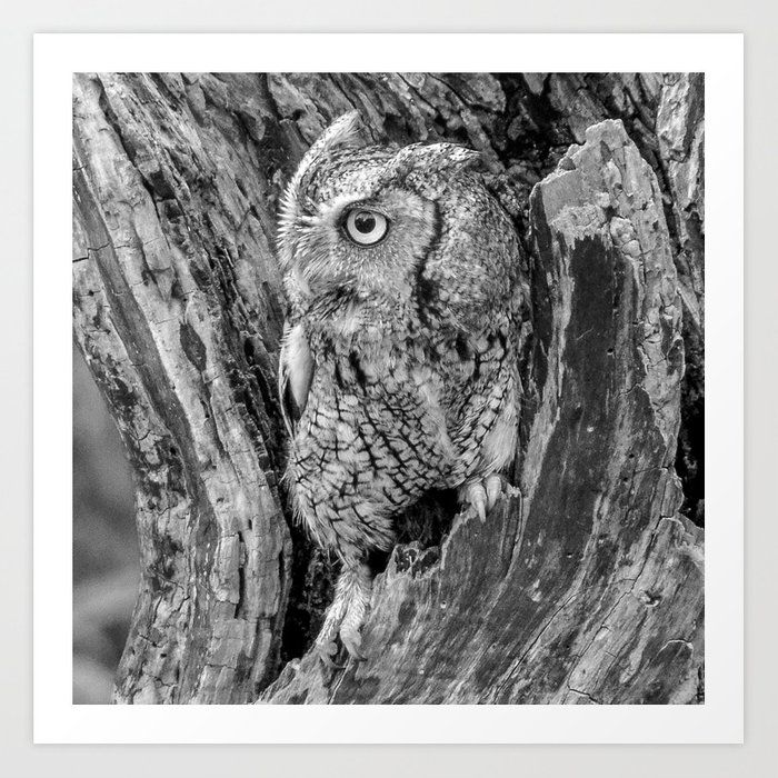 Echo the Screech Owl by Teresa Thompson Art Print