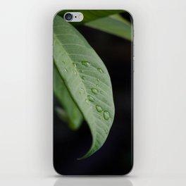 Dewey Leaf iPhone Skin