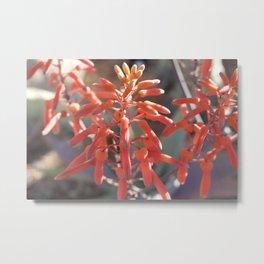 Aloe Flower Metal Print