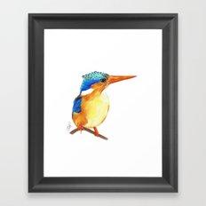 Kingfisher I Framed Art Print