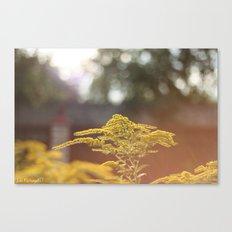 Summer mood Canvas Print