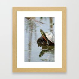 Painted Turtle on Mud in a Marsh Framed Art Print