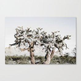 Pale Cholla Cacti Canvas Print