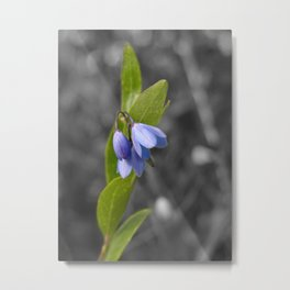 Selective color bluebell flower Metal Print