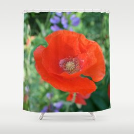Red Poppy with Lupin by Mandy Ramsey, Haines, Alaska Shower Curtain