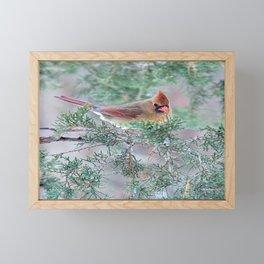 Pretty Female Cardinal Framed Mini Art Print