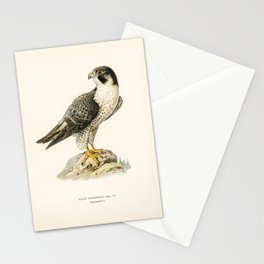 Peregrine Falcon (Falco peregrinus) illustrated by the von Wright brothers Stationery Cards